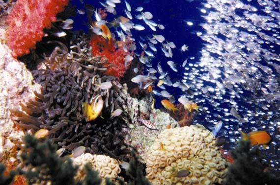 Aqaba Sea