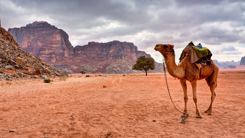 Day 3, Amman/ Wadi Rum/ Petra  picture