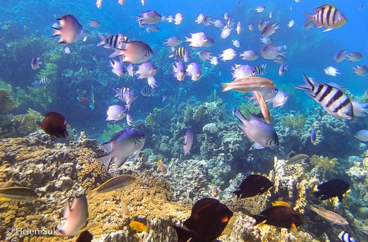 Aqaba Corals